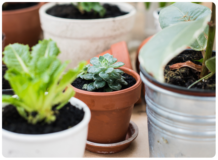 Watering Houseplants in Winter